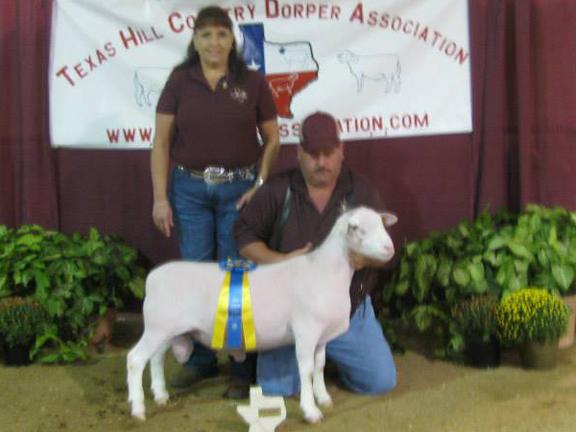 Reserve Champion Spring Ram Lamb (haltered) sold for $400