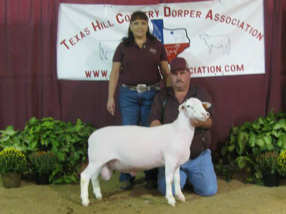 Reserve Champion White Dorper Fall Ram Lamb (unhaltered) sold for $700