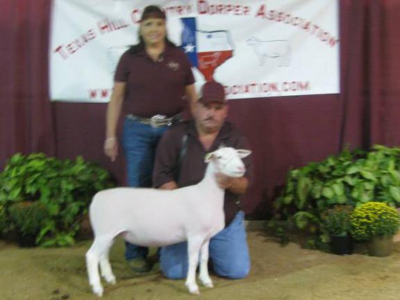 Reserve Champion White Dorper Spring Ewe Lamb (unhaltered) sold for $600.