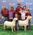 Reserve Champion Ram - Houston Livestock Show 2017