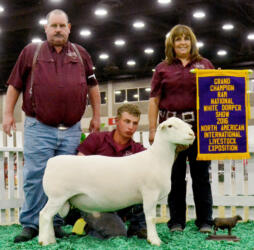 Grand Champion Ram - NAILE 2016