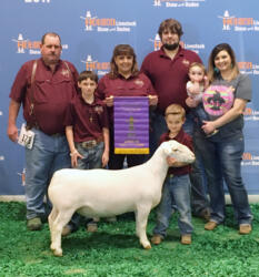 Champion Ram - Houston Livestock Show 2017