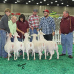 Second Place Flock - NAILE 2015