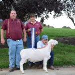 Reserve Champion Ram - Southern States 2015