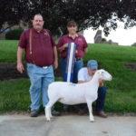 Reserve Champion Ewe - Southern States 2015